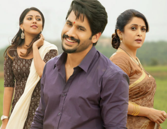 Shailaja Reddy Alludu 2 Days AP/TS Collections