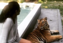 Beauty with beast : Anasuya playing with Tiger