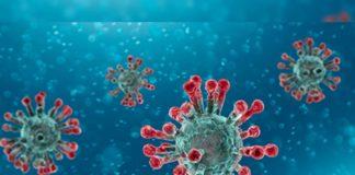 226 Coronavirus Positive cases in AP: Area wise list