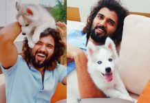 Vijay Deveakonda introduces husky pup Storm Deverakonda