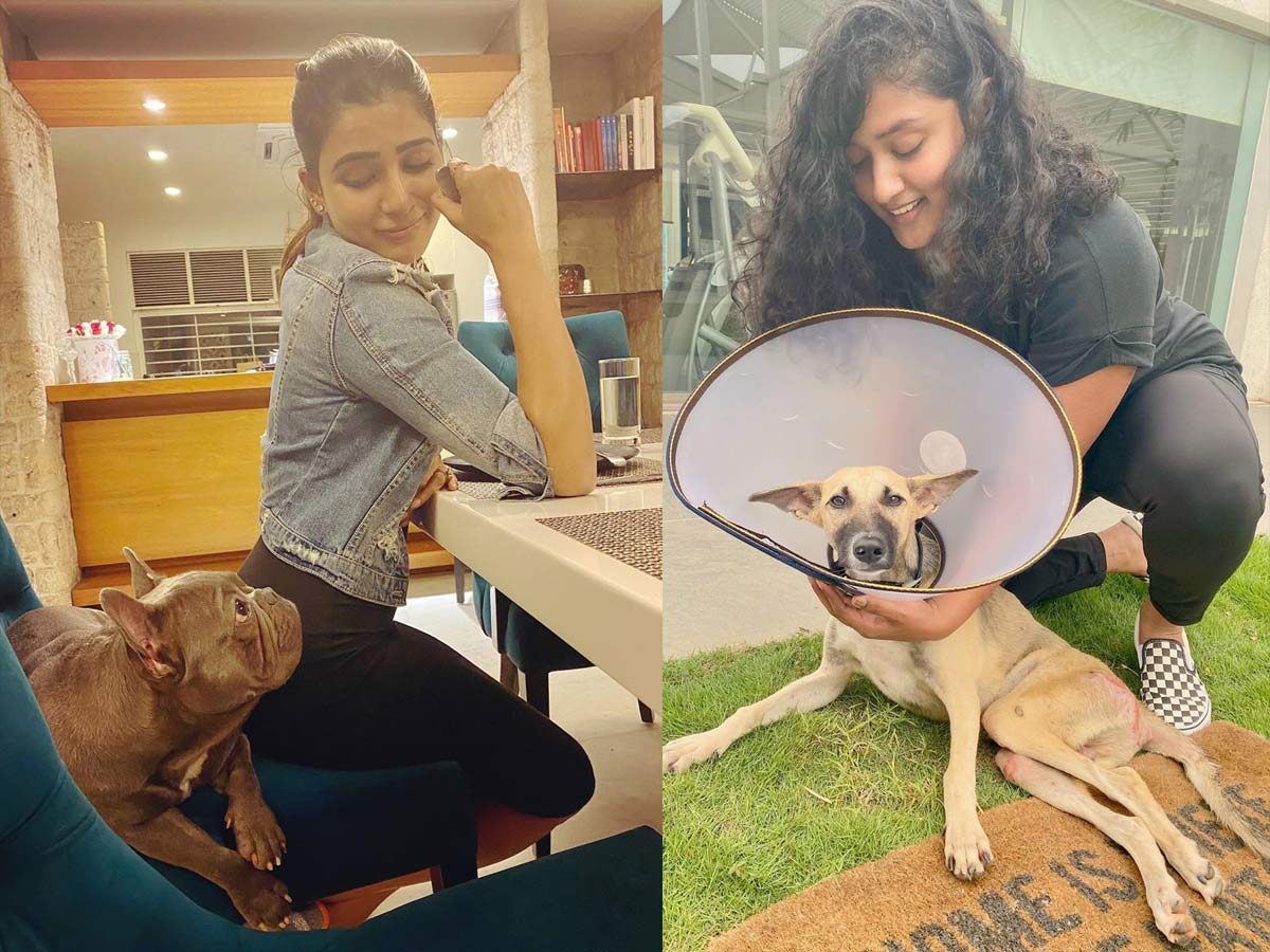 Samantha Akkineni appreciation post about her hero and paralysed dog