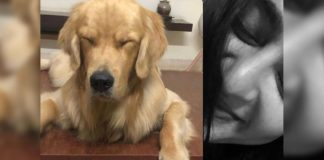 Anushka Shetty and her pet dogfind zen in life