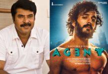 Mammootty remuneration for Akhil Akkineni Agent