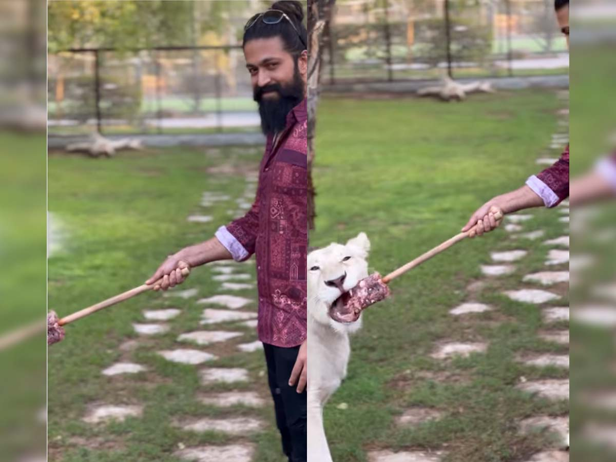 KGF star Yash feeds lion without any barriers